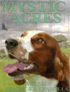 Mystic Acres Welsh Springer Spaniels